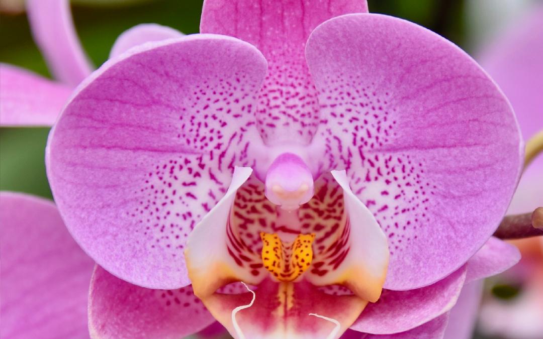 Come scegliere un fiore per la Festa della mamma bello, sano e forte!